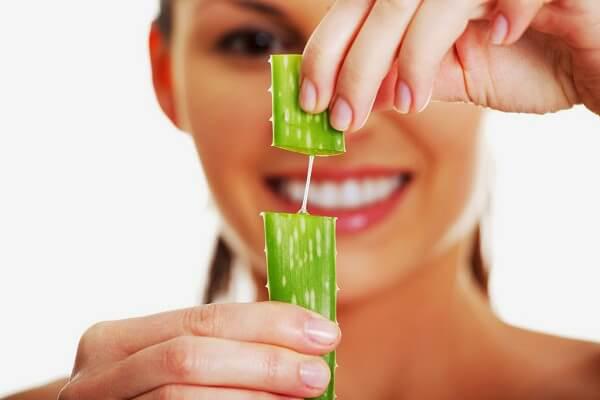 Nha đam chứa nhiều nước giúp giữ độ ẩm cần thiết cho da